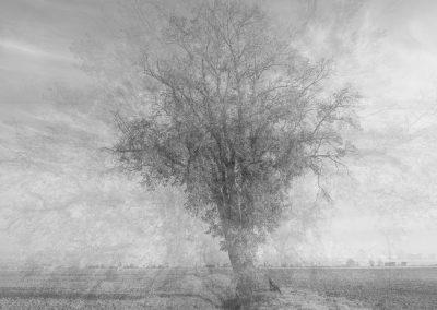 L'albero dei ricordi, Pincara (RO)