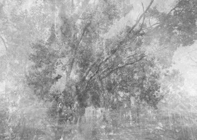 L'albero di Berra