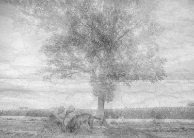 L'albero dei tartufi