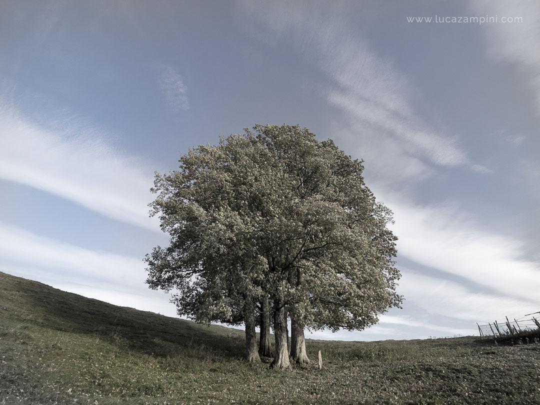 Groupe d'arbres à Lessinia